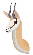 Springbok Portrait Made In Uni...
