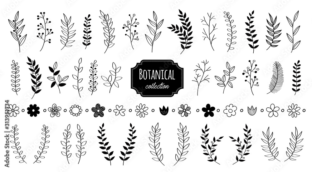 Fototapeta Hand drawn vector floral elements. Branches and leaves. Herbs and plants collection. Vintage botanical illustrations.