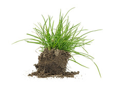Green Grass, Soil And Grass Is...