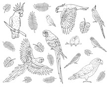 Vector Set Bundle Of Hand Drawn Doodle Sketch Different Parrots Isolated On White Background