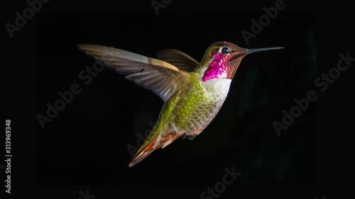 Fotografie, Obraz hummingbird in flight