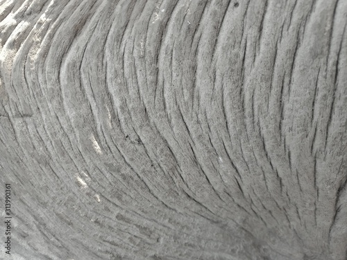 Fototapety, obrazy: The texture and pattern of the old stump