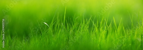 Obraz Fresh green grass background with sunlight in summer - fototapety do salonu