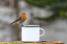 European Robin Sits On The Edge Of A Tin Cup Against A Blurred Background