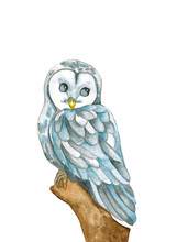 Owl Flying. Barn Owl On White Background. Watercolor Illustration. Cute Owl Baby