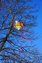 Colorful Kite Soars In The Col...