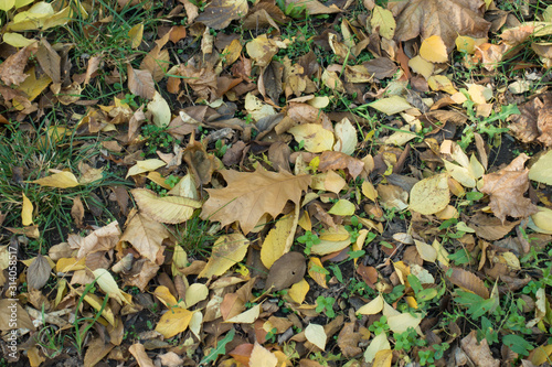 Photo Greenish yellow and brown fallen leaves on greenery from above