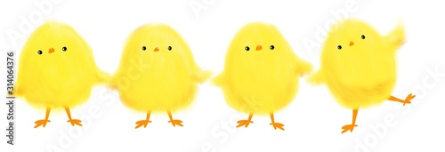 Fotografering collection of cute cartoon yellow chicks for Easter on white background