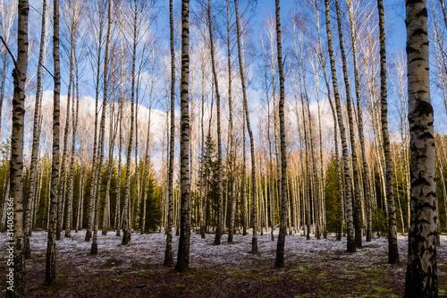 Fototapeta Dolina Górnej Narwi, Zima na Podlasiu, Szlak Konopielki obraz na płótnie