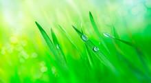 Water Drops On Fresh Grass Lea...