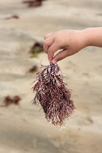 Seagrass Found On The Beach