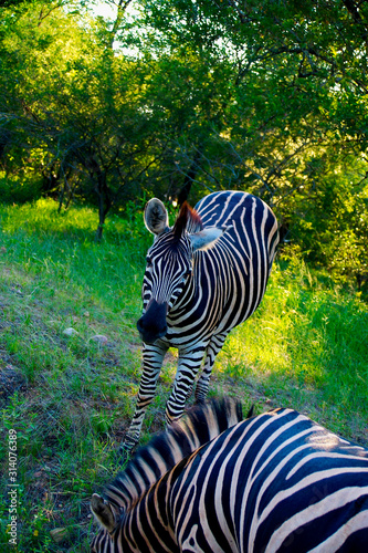 Photo Kruger National Park and Mozambique