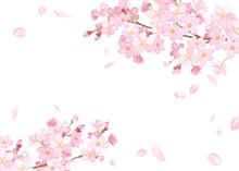 春の花:さくらと散る花びらのフレーム 水彩イラストのトレースベクター