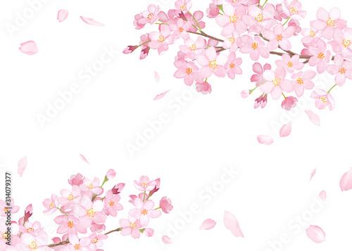 Slika na platnu 春の花:さくらと散る花びらのフレーム 水彩イラストのトレースベクター