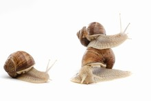 Snail White Background Animal ...