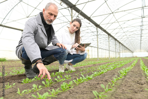 Photo Apprentice in greenhouse learning about organic agriculture