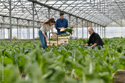 Fototapeta Farmer with apprentice working in greenhouse obraz