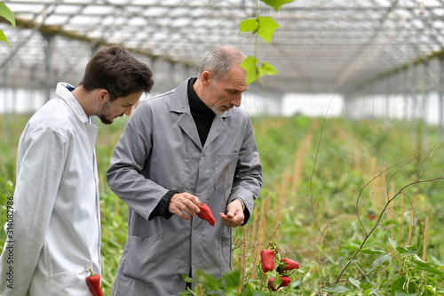 Fototapeta Apprentice in greenhouse learning about organic agriculture obraz