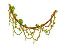 Liana Or Jungle Plant Or Vine ...