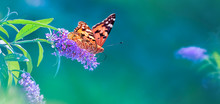 Beautiful Butterfly And Lilac ...