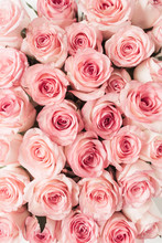 Pink Rose Flowers Pattern Background. Top View Floral Texture.