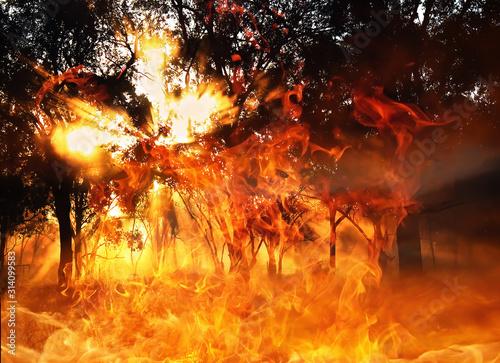 Obraz Brand und Feuer im Wald und Busch - fototapety do salonu