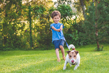 Small Boy And Dog Training To ...