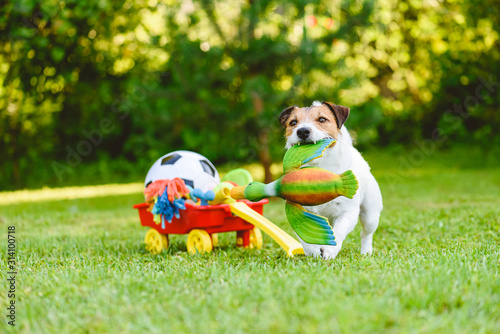 Cuadros en Lienzo Dog fetches toy duck bird from cart full of pet toys and sport balls