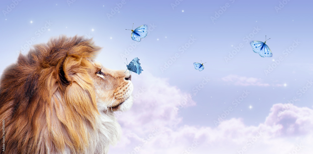 Fototapeta African lion with butterfly sitting on nose, morning cloudy sky banner. Landscape with flying butterflies in clouds, king of animals. Proud dreaming fantasy leo looking on stars.