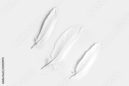 Cuadros en Lienzo Three white feathers on a white background
