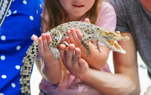 The Child Holds A Small Crocod...