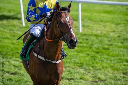 Fotografía  Race horse and jockey walking by race track barrier