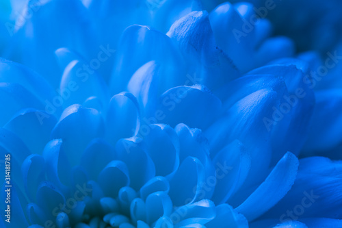 Macro Flower Petals in Blue Tones