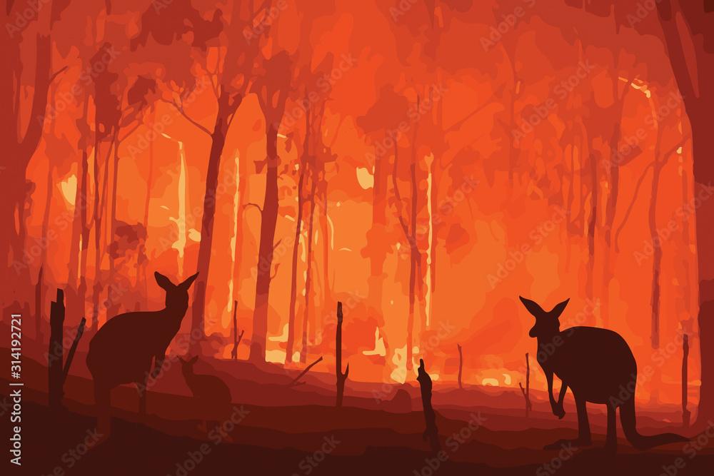 Fototapeta Fire in Australia. Forest fires with silhuette of wild animals kangaroo. Pray for Australia.