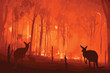 Leinwandbild Motiv Fire in Australia. Forest fires with silhuette of wild animals kangaroo. Pray for Australia.