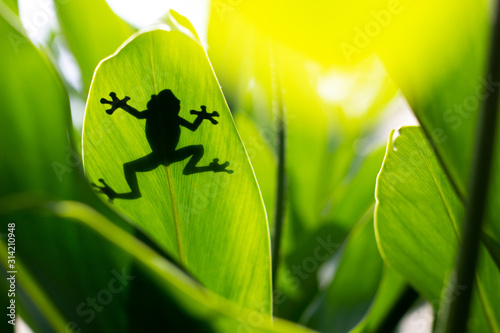 Photo Shadow of a frog across a green leaf