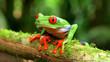 agalychnis callidryas monkey frog
