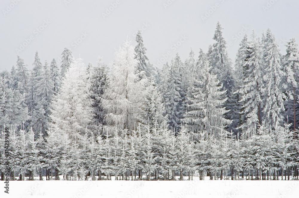 Fototapeta Atak zimy, śniegu i lodu bestia ze wschodu