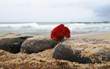Burial At See. Funeral Flower, Lonely Red Rose Flower At The Beach.