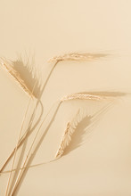 Ears Of Rye, Wheat On Pastel Beige Background. Flat Lay, Top View Minimal Organic Healthy Raw Food Concept.