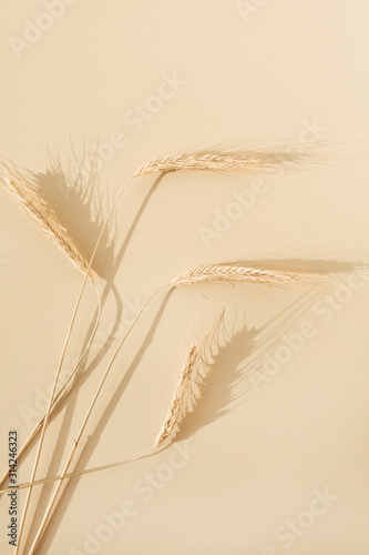 Ears of rye, wheat on pastel beige background Canvas Print