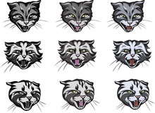 Cats, Cat Head Image, Various ...