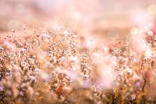 Beautiful Gras Flower Field Wi...