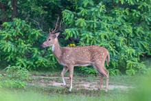 Yala National Park 3