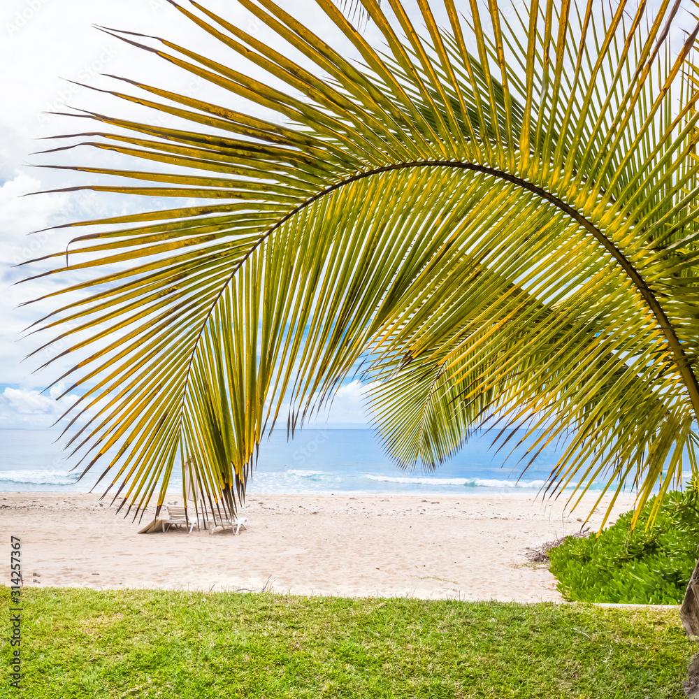Fototapeta palm tree on the beach of Boucan Canot, Réunion Island