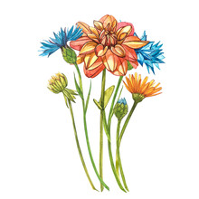 Watercolor Orange Dahlias. Wil...