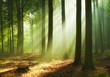 Leinwandbild Motiv Beautiful morning in the forest