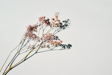 Dried Wild Flowers On White Ta...