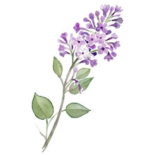 Flieder Lilac Blume Violett Li...