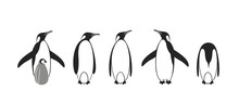 Penguin Logo. King Penguin. Set
